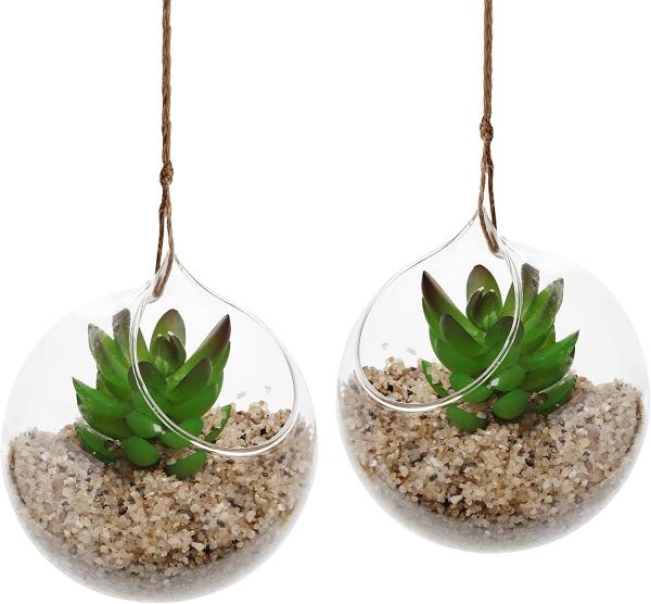plantes succulentes deux jolis terrariums
