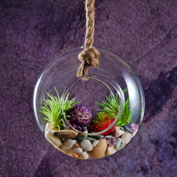 plantes succulentes en belles couleurs