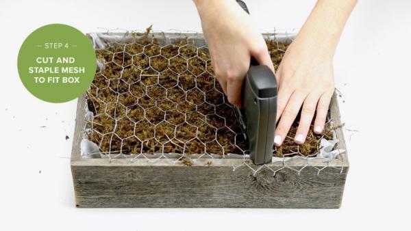 plantes succulentes fixer avec l'agrafeuse