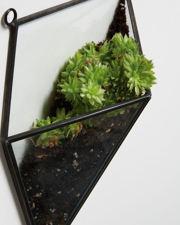 plantes succulentes losange accroché