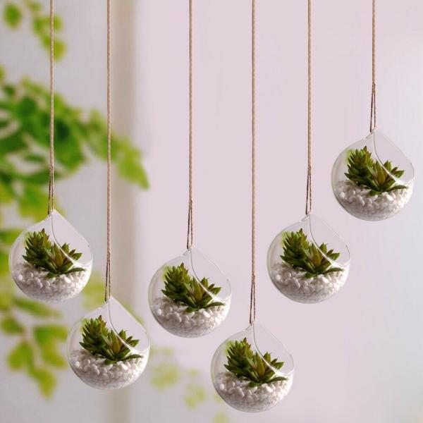 plantes succulentes petits jardins sphériques