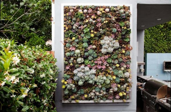 plantes succulentes pour la terrasse