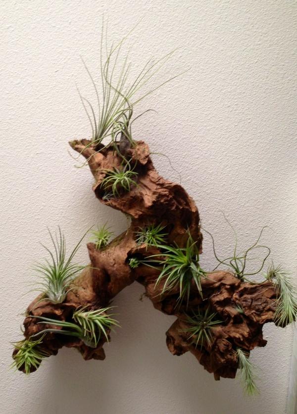 plantes succulentes suggestion intéressante