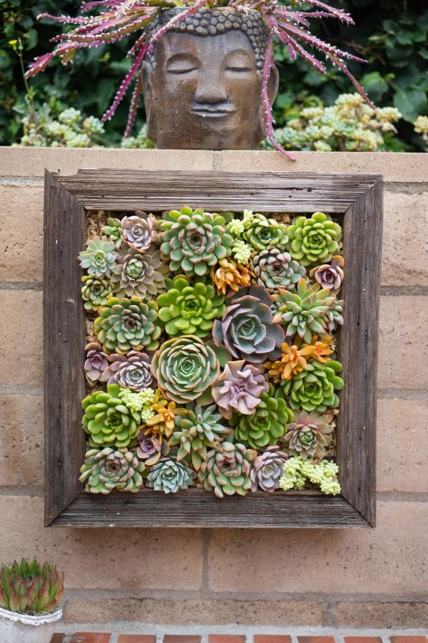 plantes succulentes une installation originale