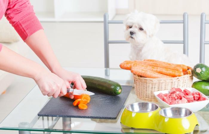 recette croquette chien idée comment préparer