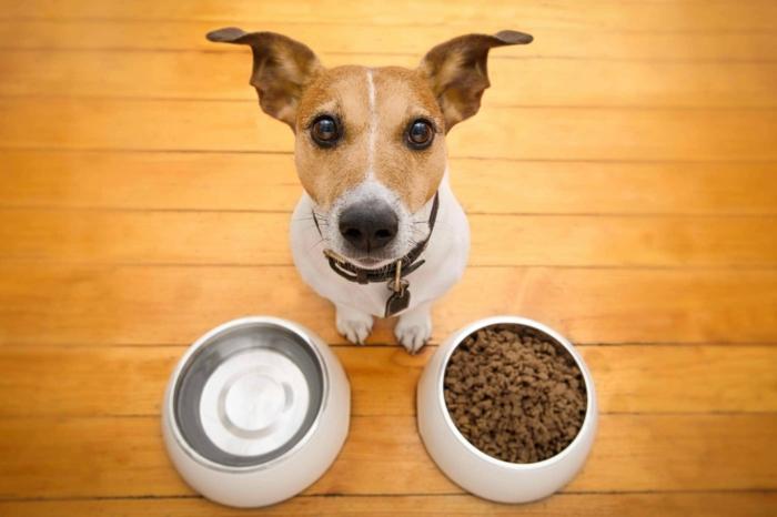recette diy croquette chien