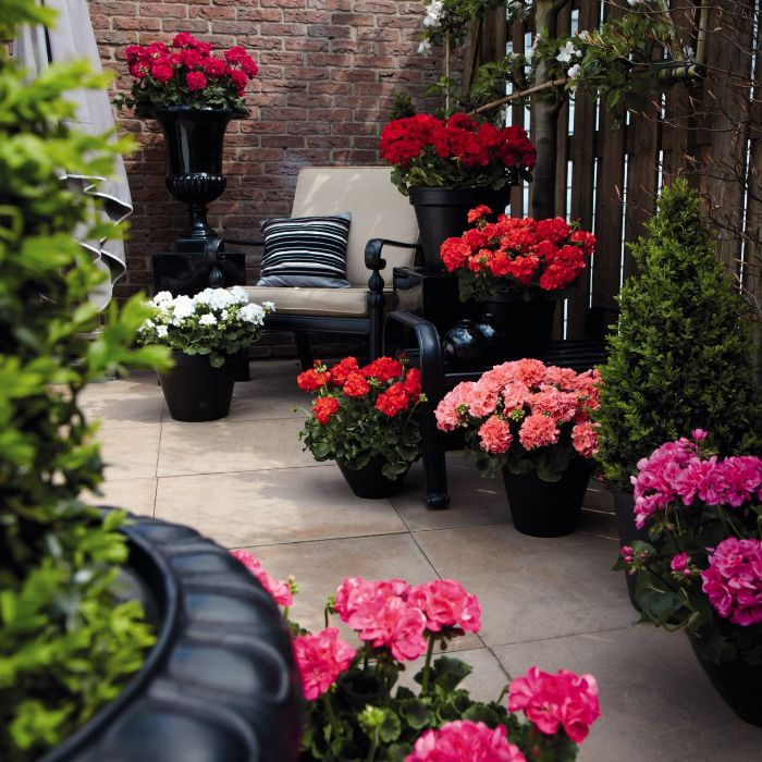 rosier en pot déco terrasse