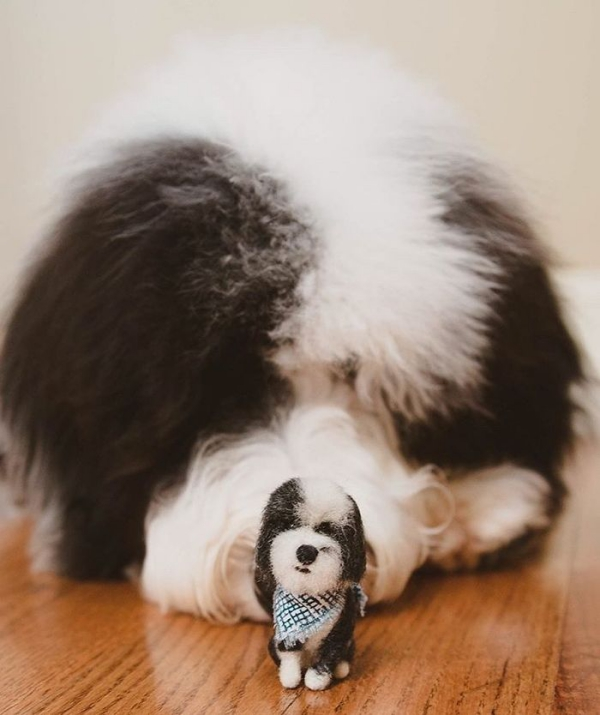 animal de compagnie insolite Bearded Collie