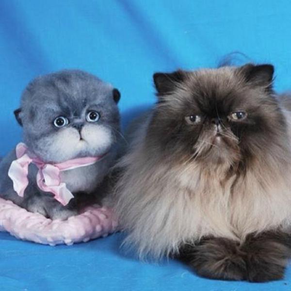 animal de compagnie insolite chat et compagnie