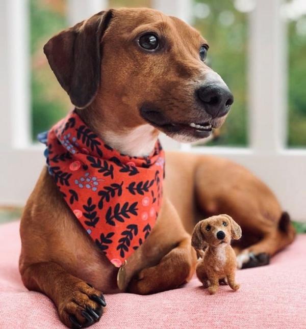 animal de compagnie insolite du type Beagle