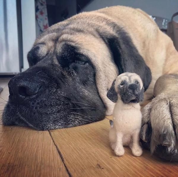 animal de compagnie insolite endormi à côté
