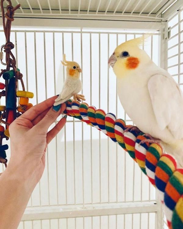animal de compagnie insolite perroquet et sosie