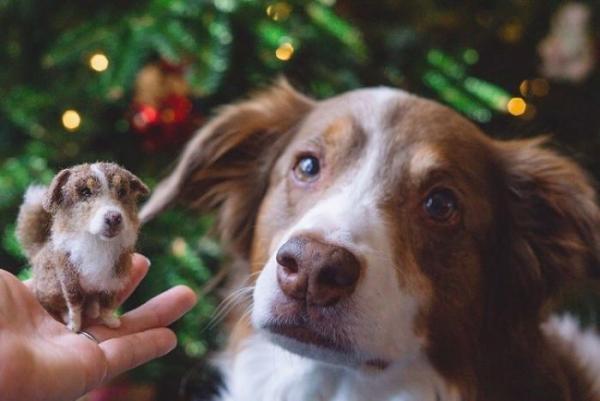 animal de compagnie insolite regard qui demande