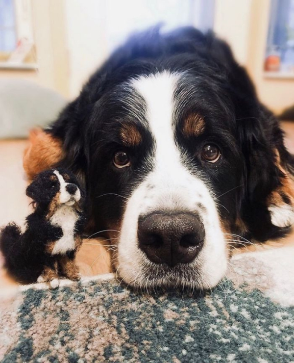 animal de compagnie insolite un Landseer fatigué des jeux