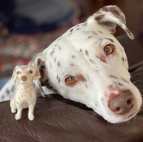 animal de compagnie insolite un joli Dalmatien