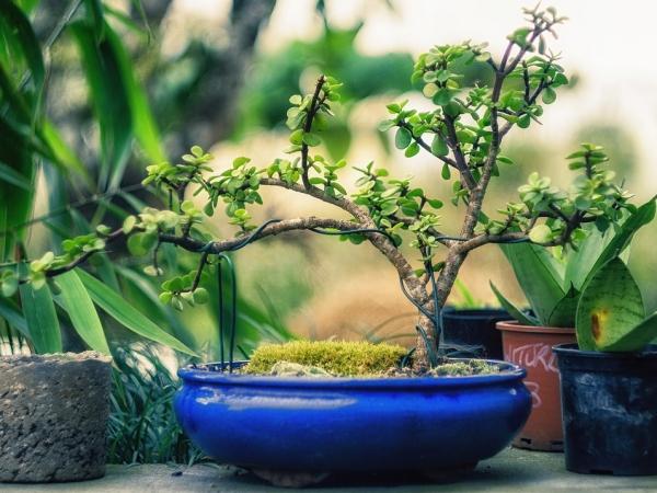 comment faire un bonsaï câblage avec fil métallique
