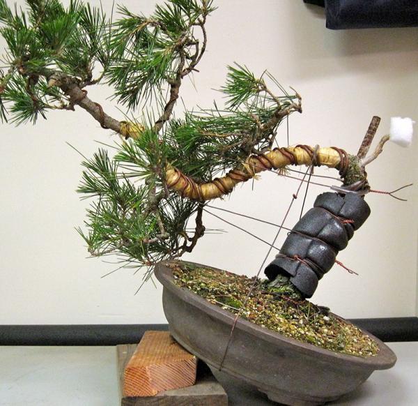 comment faire un bonsaï câblage