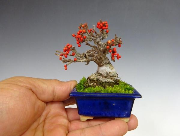 comment faire un bonsaï choisir le récipient