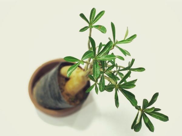 comment faire un bonsaï choisir une espèce de plante