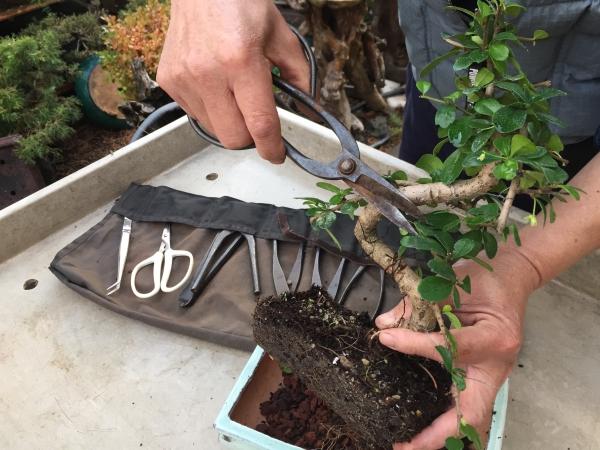 comment faire un bonsaï coupe des branches