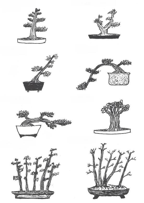 comment faire un bonsaï les différents styles