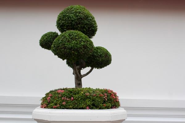 comment faire un bonsaï touches finales