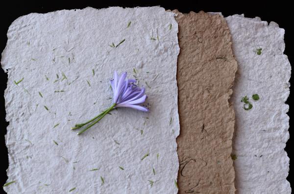 diy papier ensemencé couleurs différentes
