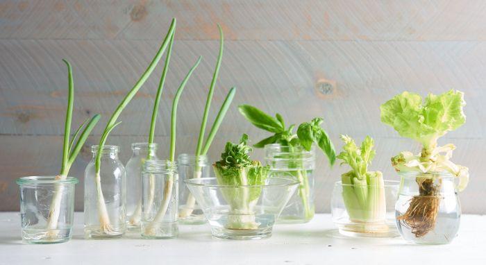 faire repousser les légumes conseils