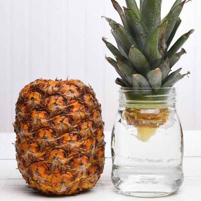 faire repousser les légumes fruit ananas