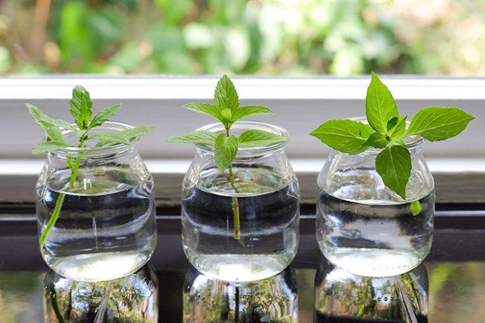herbes faire repousser les légumes