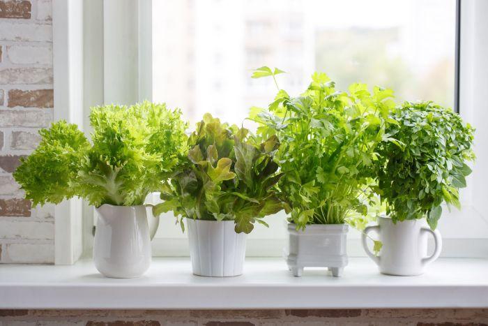 jardin à la maison faire repousser les légumes