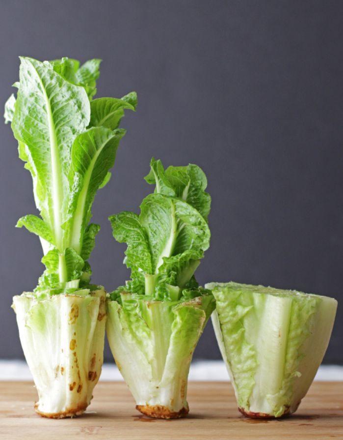 laitue faire repousser les légumes