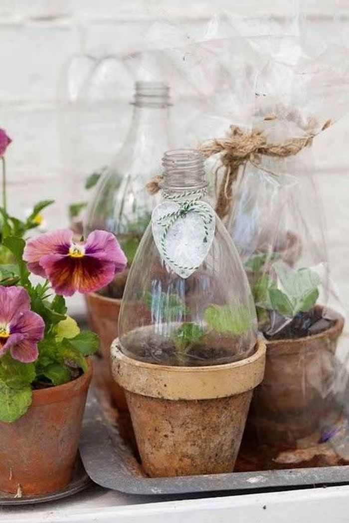 recyclage bouteille plastique protéger les fleurs du froid