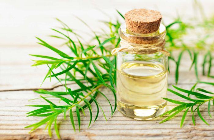 tea tree oil vinaigre blanc désinfectant