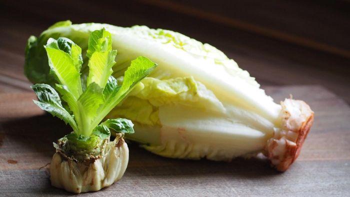 zéro déchet faire repousser les légumes