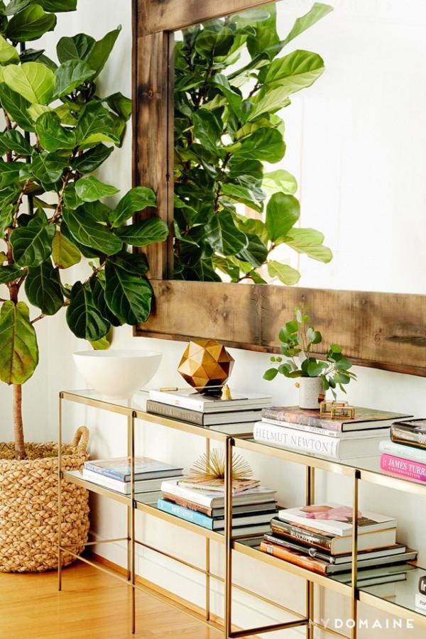 ameublement maison une plante haute