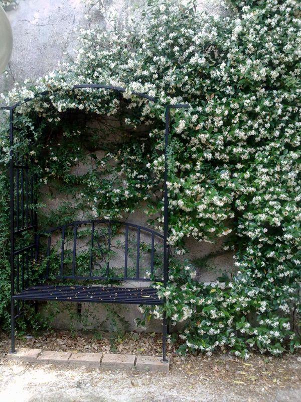 comment habiller un mur extérieur abîmé jasmin étoilé