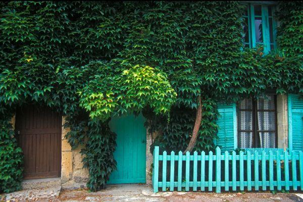 comment habiller un mur extérieur abîmé vigne vierge