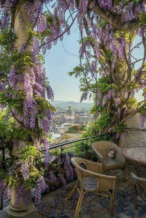 déco florale plante grimpante glycine de chine wisteria comment planter