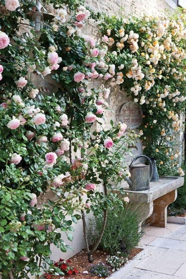 déco murale comment habiller un mur extérieur abîmé rose grimpante