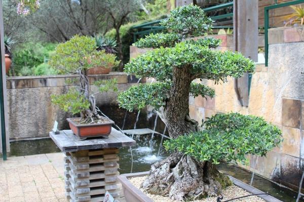 déco tronc d'arbre former un bonsaï
