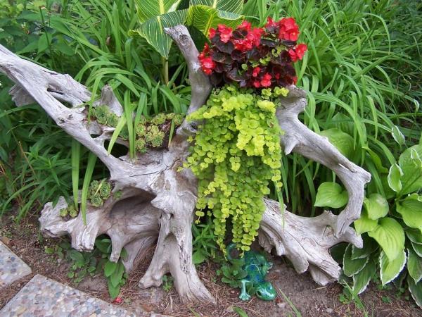déco tronc d'arbre naturel et étrange