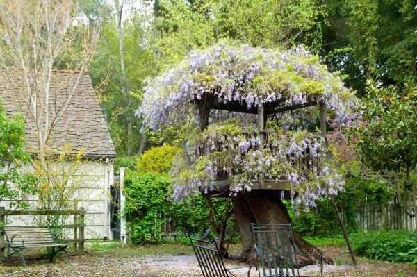 déco tronc d'arbre un abri sur un tronc énorme