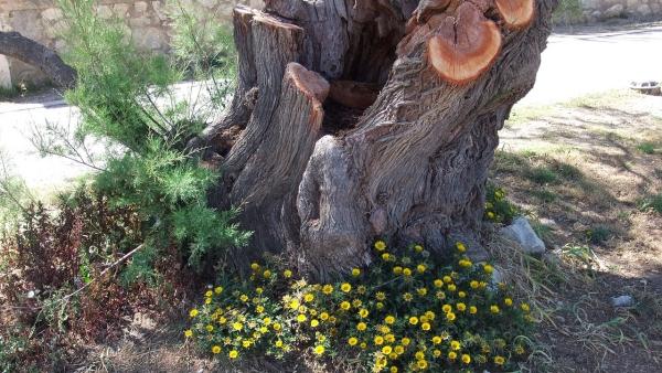 déco tronc d'arbre un tronc centenaire