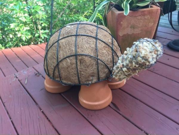 diy jardinière originale tortue avec des succulentes cinquème étape