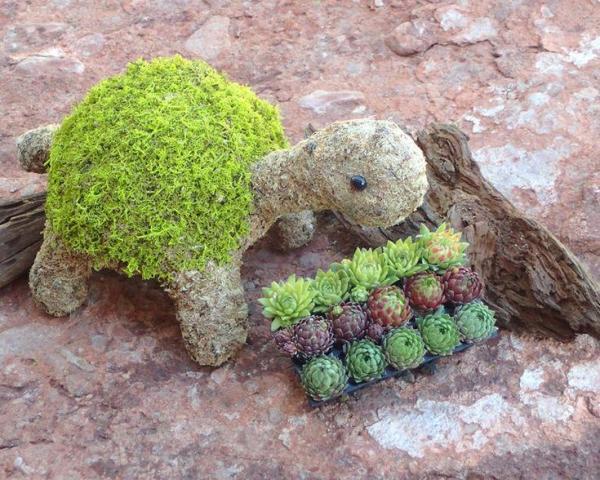 diy tortue de plantes succulentes et mousse végétale jardinière originale