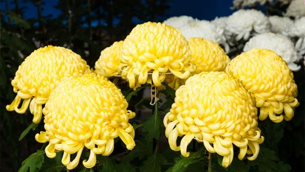 fleurs et plantes blanc et jaune