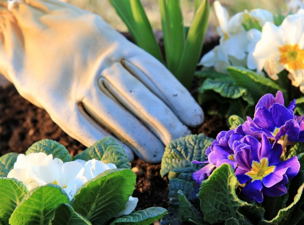 fleurs et plantes creuser un trou