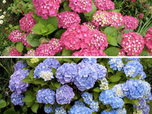 fleurs et plantes en deux couleurs