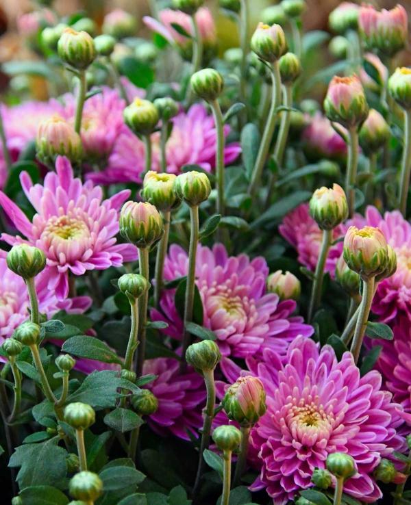 fleurs et plantes en train de fleurir